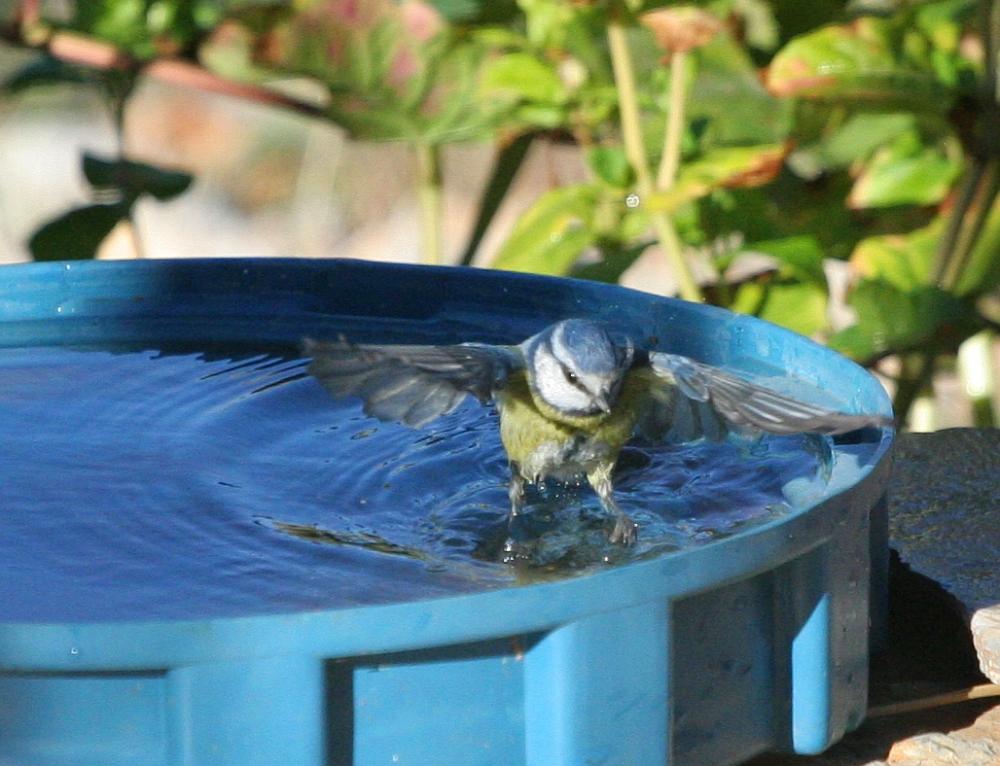 Bathtime2