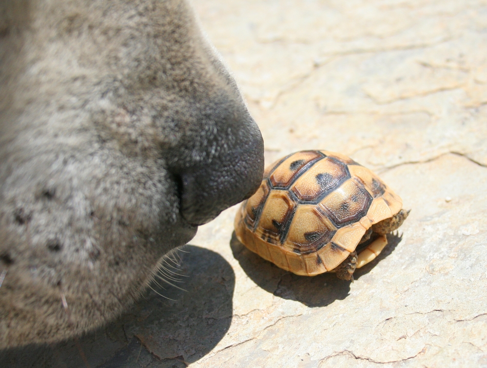 Baby Tortoise Scares Pasha