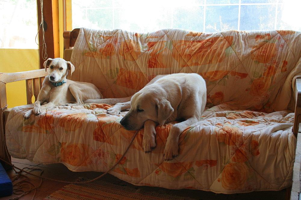 Pasha & Molly